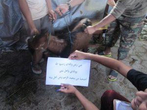Proses Penyembelihan hewan Qurban yang di laksanakan di Pondok Pesantren Al Ukhuwah.