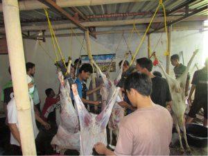 Proses pengulitan Hewan qurban Kambing yang dikerjakan oleh para santri Al Ukhuwah dan Ustadz Al Ukhuwah